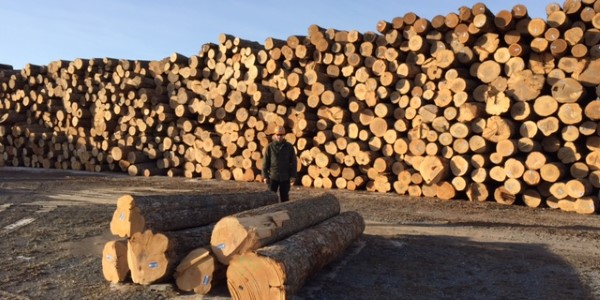 Logging Timber Management Hardwood Lumber In New York